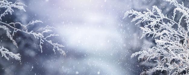 Рождественский праздник фон. ветви заснеженных растений на волшебном размытом фоне во время снегопада, копия пространства, панорама