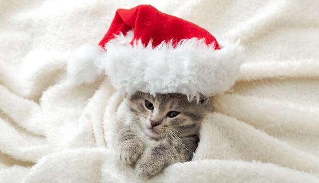 Рождественский котенок в портретной шляпе санта-клауса, завернутый в мягкий пушистый белый плед. рождественский серый полосатый новогодний кот. длинный веб-баннер.