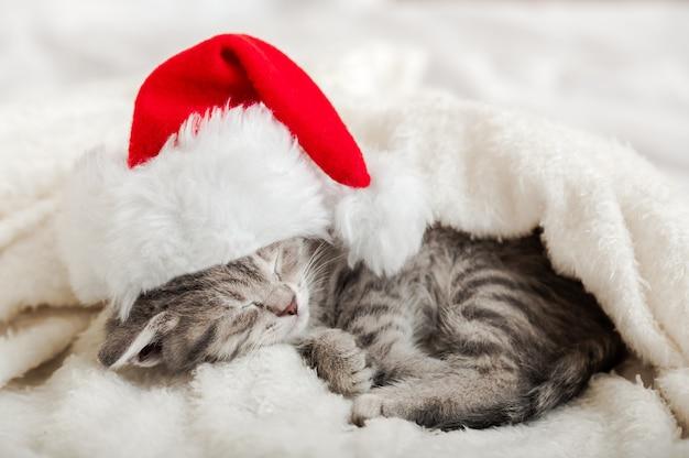 Рождественский котенок в шляпе санта-клауса спит, свернувшись клубочком на мягком пушистом белом пледе. рождественский серый полосатый кот новогодний кот спит. уютный сон кошачий сон.