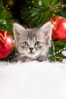 Рождественский котенок смотрит в камеру с местом для текста.