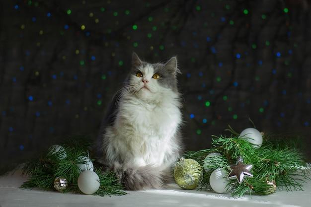 クリスマスの装飾が施されたクリスマスの子猫