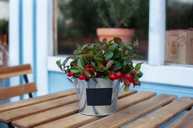 Рождественская омела стоит на деревянном столе