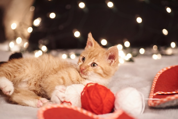 Christmas picture with a cute ginger cat of colorful lights on the background
