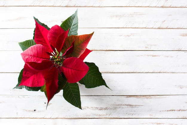 Christmas poinsettia flower on white wooden table top view, copyspace