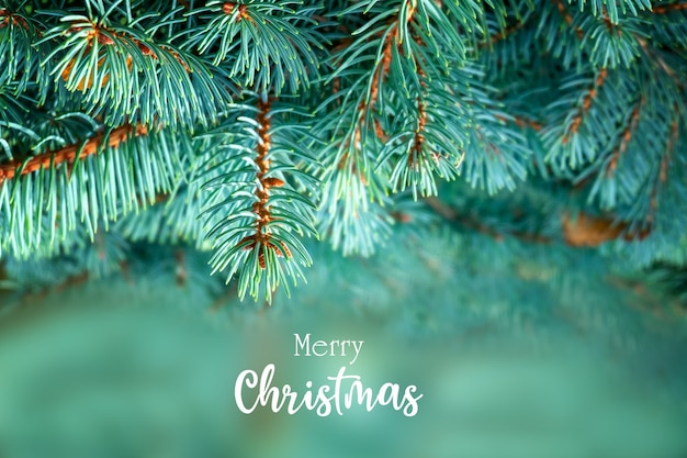 Christmas postcard greeting with beautiful fluffy fir branches and inscription merry christmas.