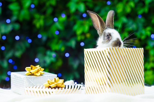 Christmas present with a pet rabbit