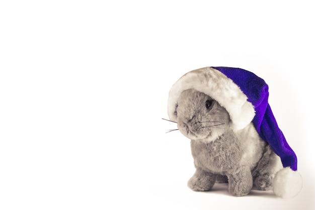 Santas 모자에 있는 크리스마스 토끼는 흰색 배경에 격리됩니다. 겨울 휴가 테마. 2021년 새해 복 많이 받으세요. 텍스트를 위한 공간입니다.
