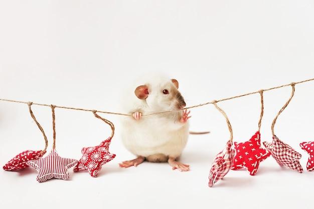 Рождественская крыса символ нового года 2020. год крысы. китайский новый год 2020. елочные игрушки, боке. крыса на фоне рождественских украшений. рождественская открытка шаблон новый год