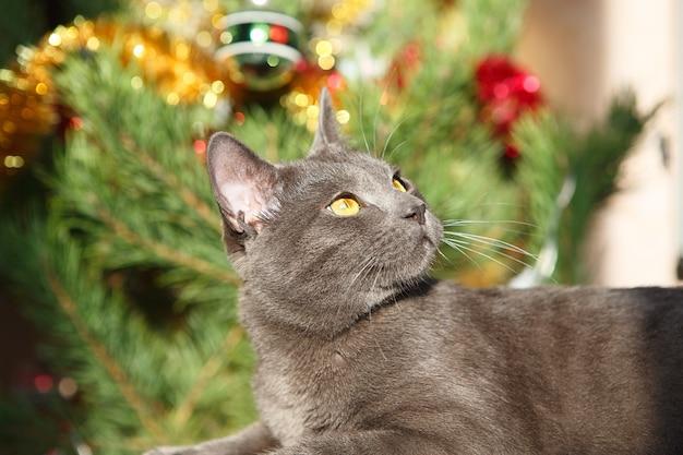 クリスマスシーズン、新年、休日、お祝い。家に座っている面白い猫。いたずらかわいい子猫