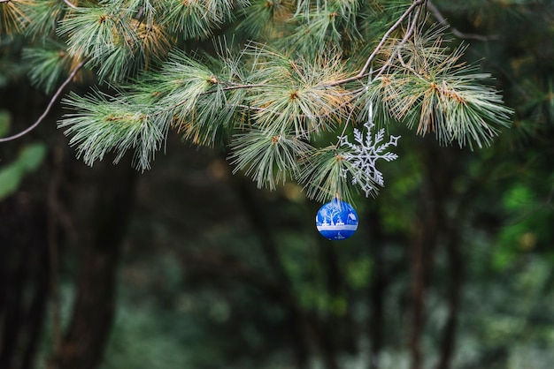 Christmas toys hanging on coniferous twig in forest