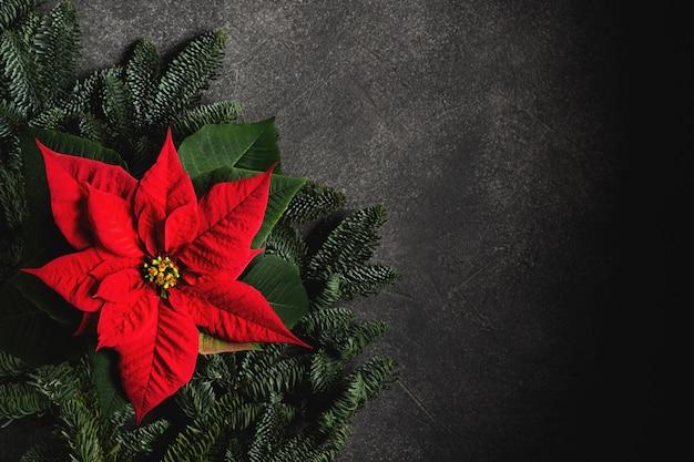 暗い背景にクリスマスの伝統的な花