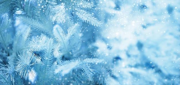 雪の中でクリスマスツリーブランチ。ブルーの色調でクリスマスの背景