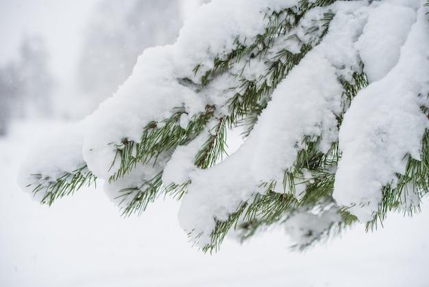 雪の中でクリスマスツリーの枝。ぼやけた雪の木と雪片のある冬の風景。クリスマスのコンセプト