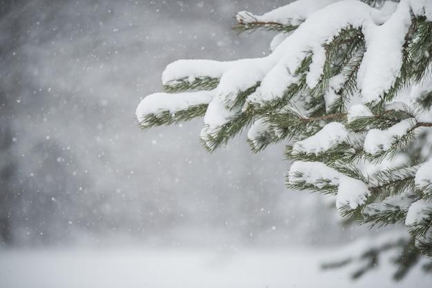 雪の中でクリスマスツリーの枝。ぼやけた雪の木と雪片のある冬の風景。テキストのためのスペースとクリスマスのコンセプト