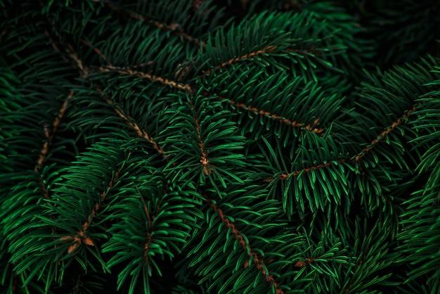 潮水の緑の色の背景のクリスマスツリーの枝