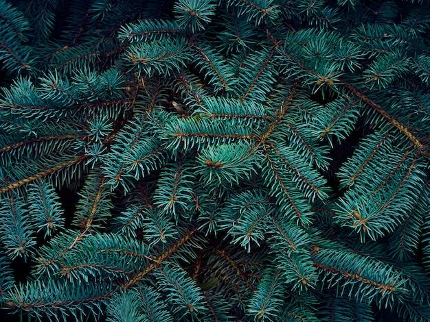 Ветви елки.