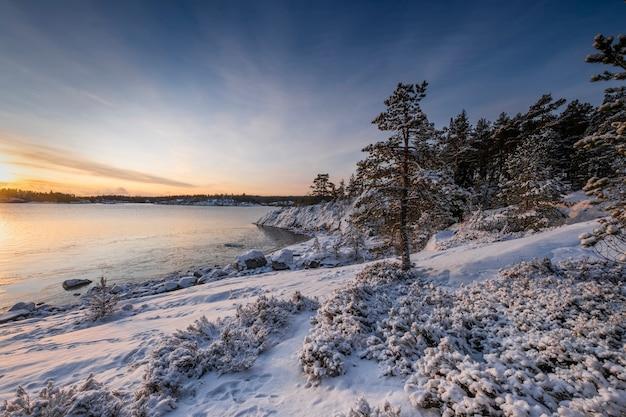 Елка в снегу и зимний восход солнца на острове ладожское озеро