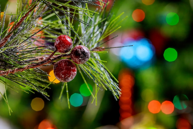 Christmas tree lights and pine branch with red berries
