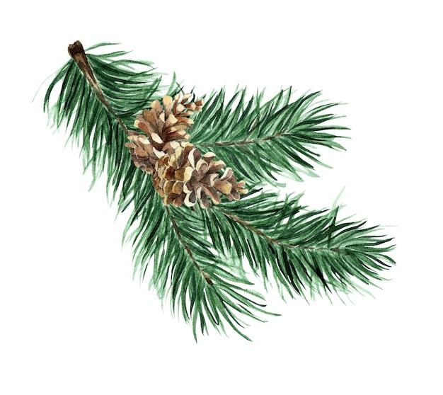 針葉樹の枝と円錐形のクリスマスツリー水彩イラスト円錐形のトウヒの枝