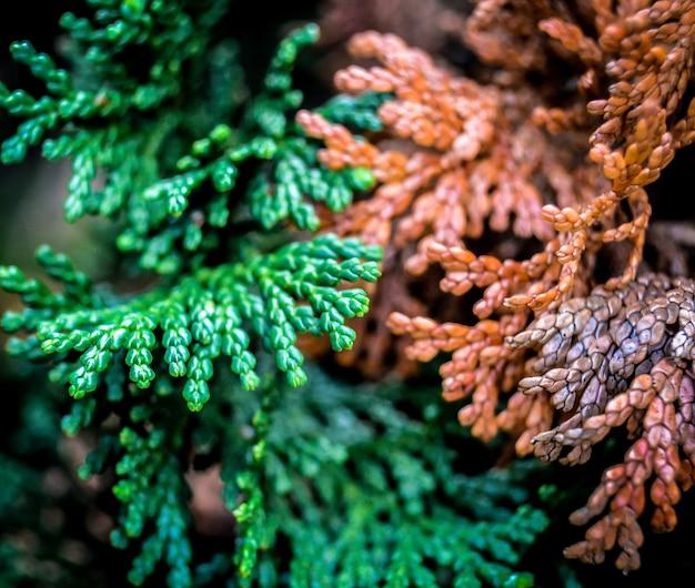 Christmas tree texture closeup
