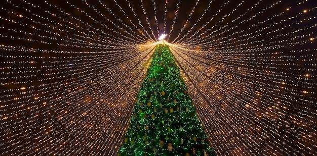 クリスマスツリー。ソフィア広場にあるウクライナのメインのクリスマスツリー。下から見る。