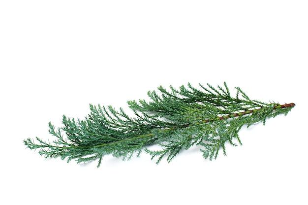 Christmas tree twig on white
