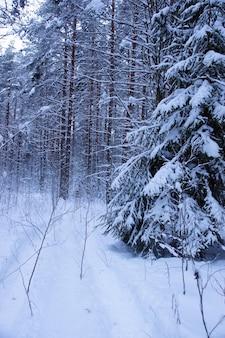 冬の森の雪の下のクリスマスツリー。