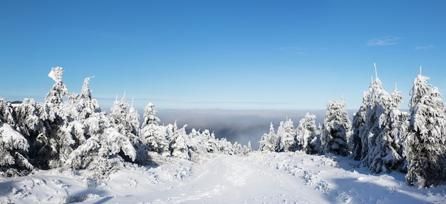 Снежные елки в горах, панорама