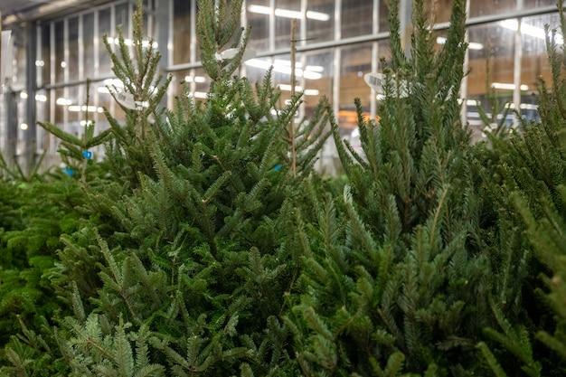 Продажа новогодних елок на рынке