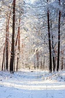 冬の雪に覆われた森のクリスマスの天気