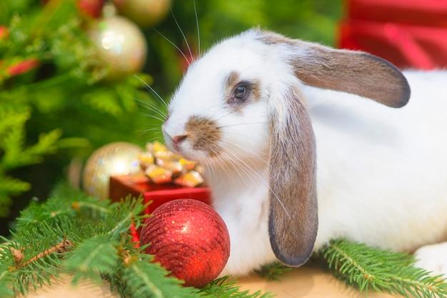 빨간 모자에 크리스마스 하얀 토끼입니다. 녹색 배경에 빨간 산타 클로스 의상을 입은 토끼 - 동물, 애완 동물, 새해 개념. 근접 촬영. 2022년