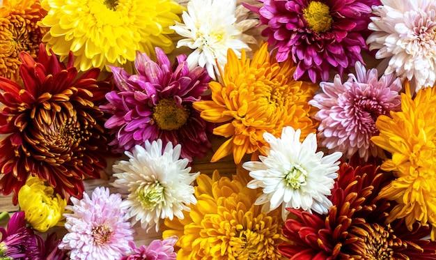 Chrysanthemianchrysantemum秋の花束愛の心カラフル