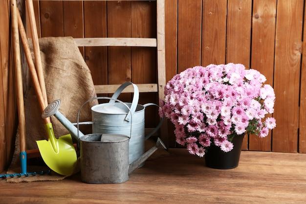 Куст хризантемы в горшке, инструменты для садоводства на деревянной поверхности стены