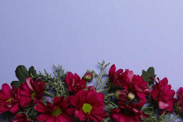 국화 꽃과 보라색 배경에 thuja 가지, 텍스트를위한 공간