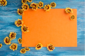 Chrysanthemum flowers on blank orange paper over the blue background