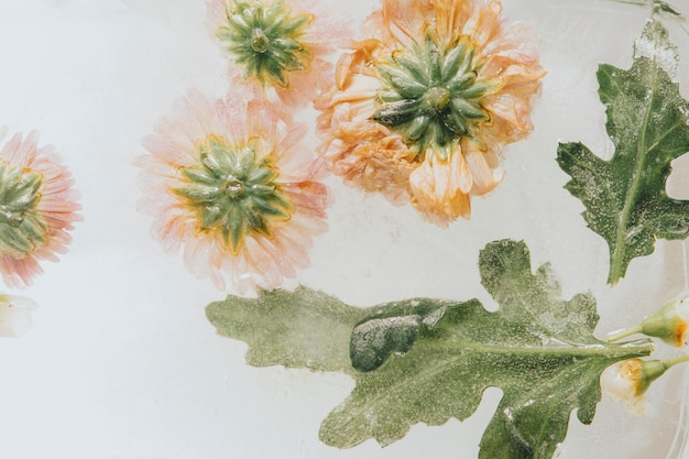 Chrysanthemum flowers with leaves frozen in ice with air bubbles pastel style