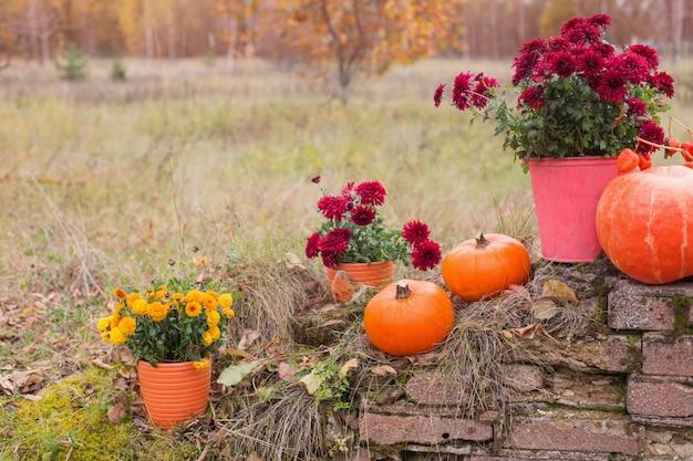フラワーポットの菊と古いレンガの壁の近くの秋の庭のオレンジ色のカボチャ