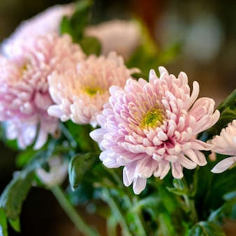 菊、ママ、菊の花のクローズアップ