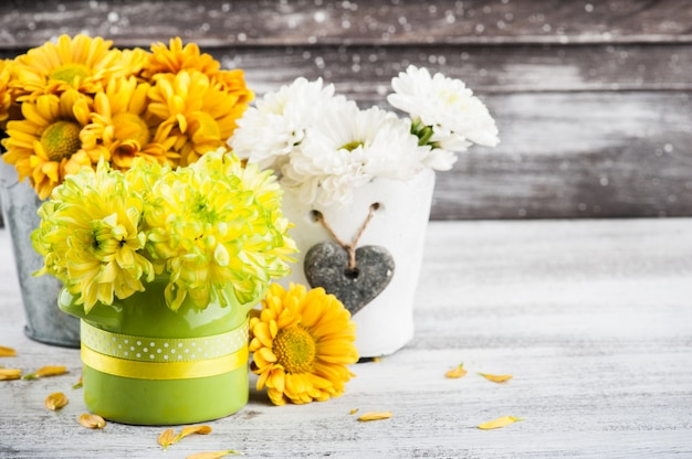 Chrysanthemum in tin pot