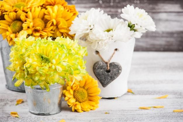 Chrysanthemum in tin pot