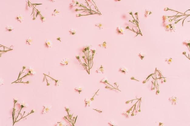 핑크에 배열하는 국화