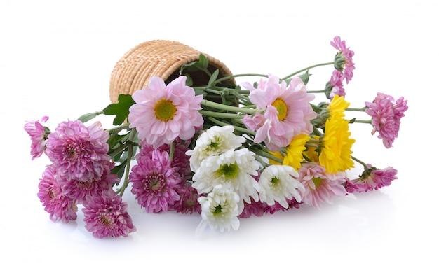 Chrysanthemums in basket on white background