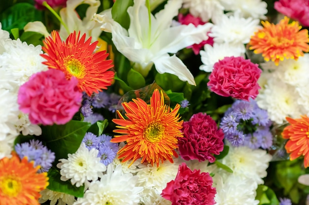 Chrysanthemums of colorful flowers