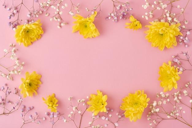Цветы хризантемы на розовом фоне. вид сверху.