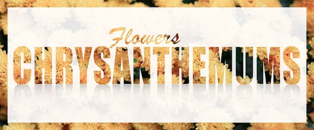 Chrysanthemums text on white banner against background of yellow flowers.