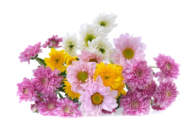 Chrysanthemums on white background