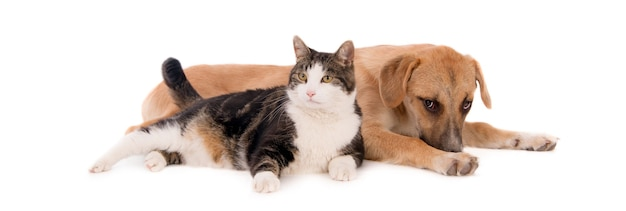 Chubby domestic cat leaning on a brown puppy lying on a white surface