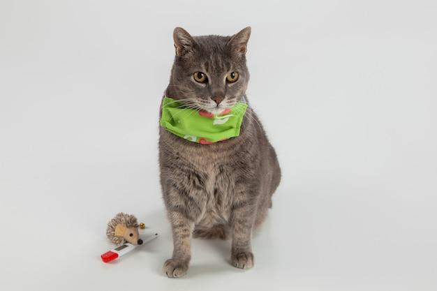 Пухлый серый кот с желтыми глазами, хирургическая маска, термометр и мягкая мышь