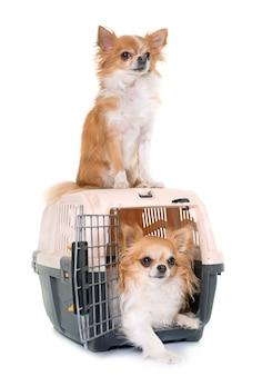チワワの神々と犬小屋