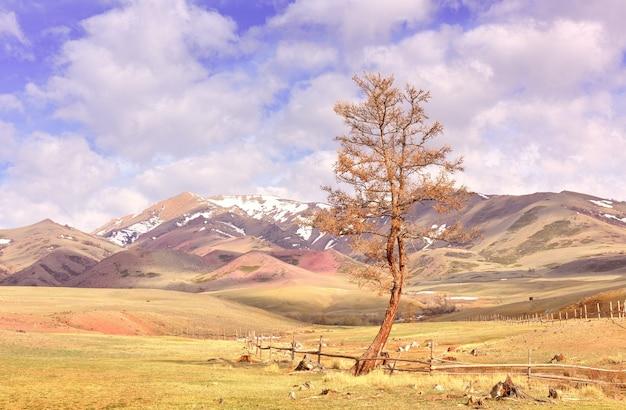 알타이 산맥의 추이 계곡 봄 대초원의 울타리 옆 나무